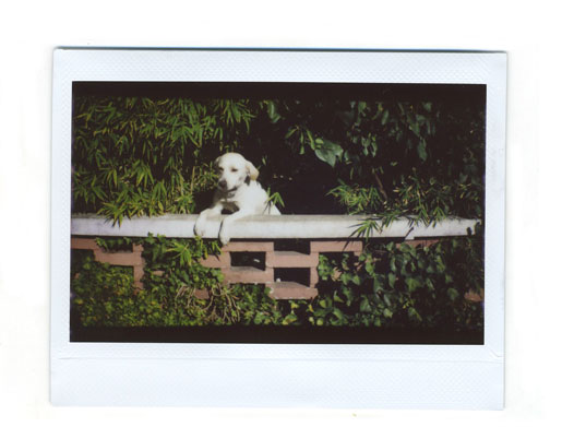 instaxWide6