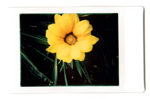 lomoinstax10-copia